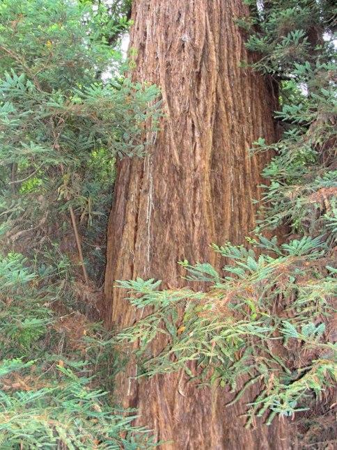 F-_2012_2012-08-11-San-Francisco_DSC02488